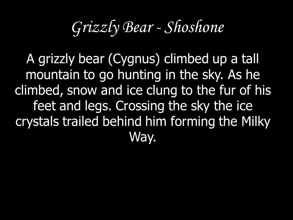 Grizzly Bear - Shoshone