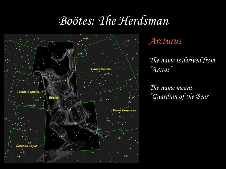 Boötes: The Herdsman Arcturus The name is derived from Arctos