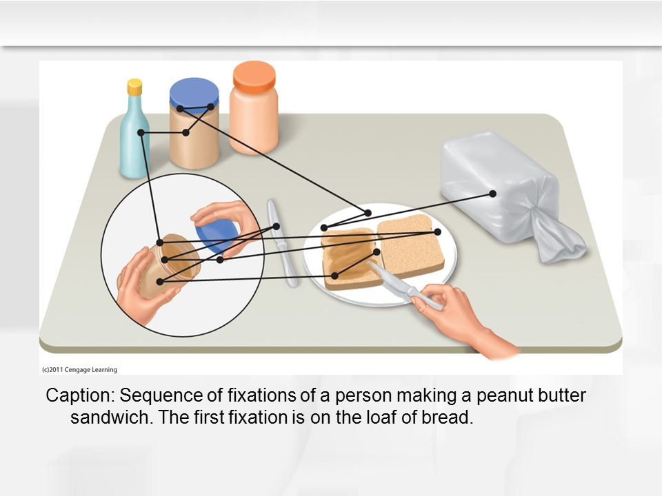 Caption: Sequence of fixations of a person making a peanut butter sandwich.