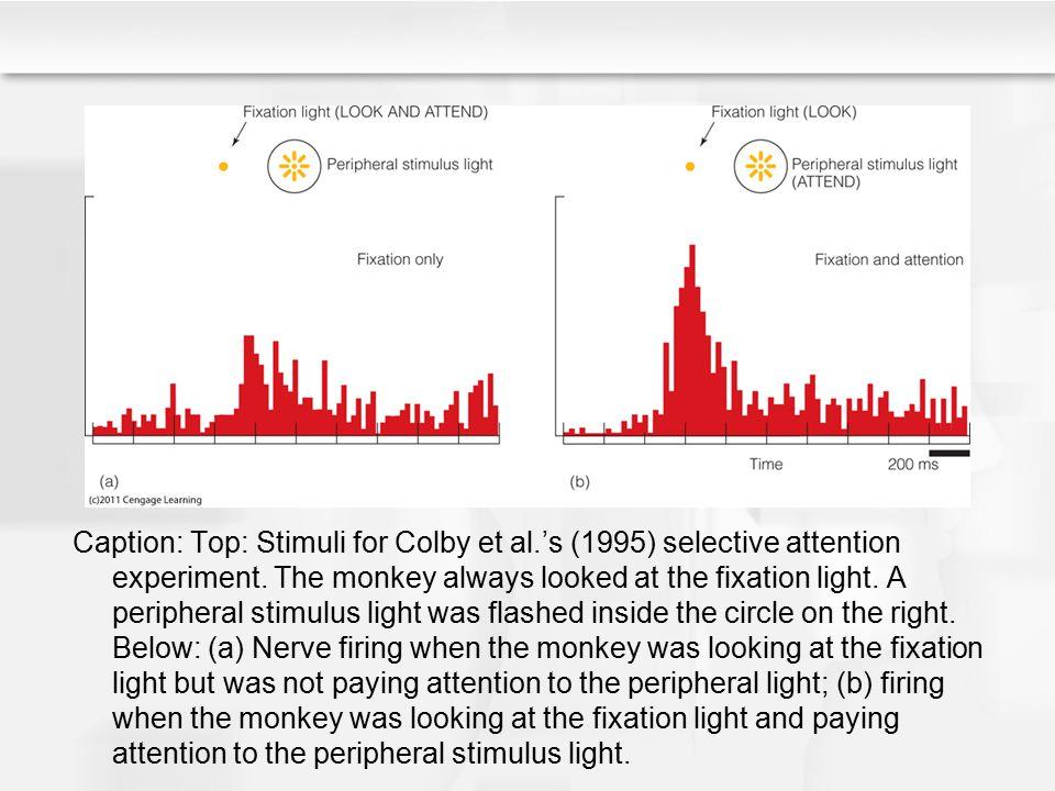 Caption: Top: Stimuli for Colby et al