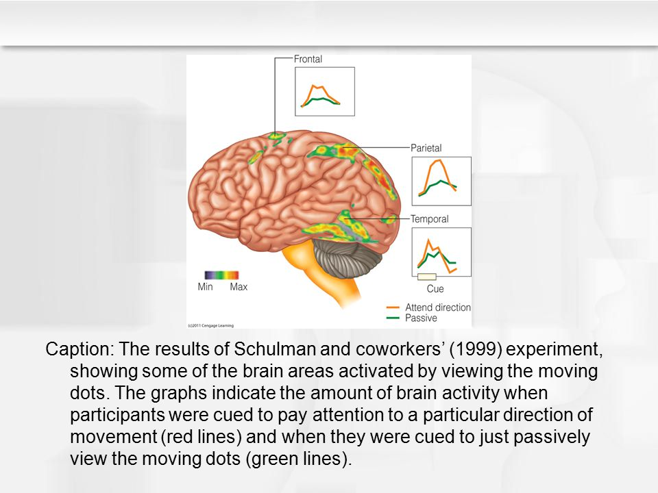 Caption: The results of Schulman and coworkers' (1999) experiment, showing some of the brain areas activated by viewing the moving dots.