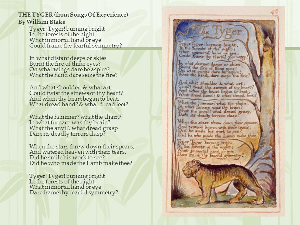 "a wealth of imagery in the tyger by william blake Read the poem ""the tyger"" by william blake two times aloud with the class (available online) opening discussion imagery in the tyger by student."