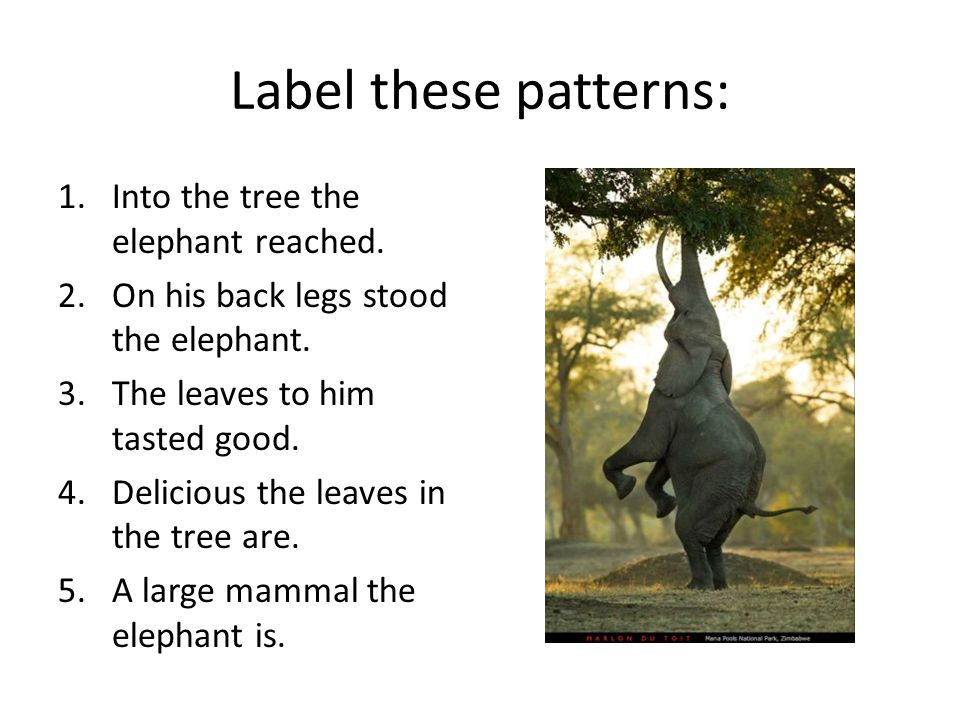 Label these patterns: Into the tree the elephant reached.