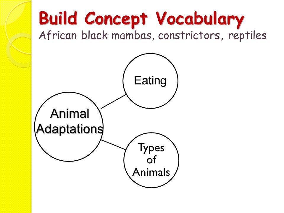 Build Concept Vocabulary African black mambas, constrictors, reptiles