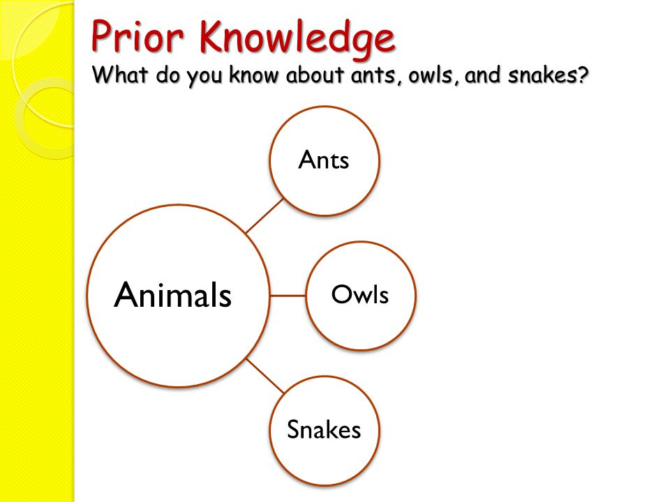 Prior Knowledge What do you know about ants, owls, and snakes