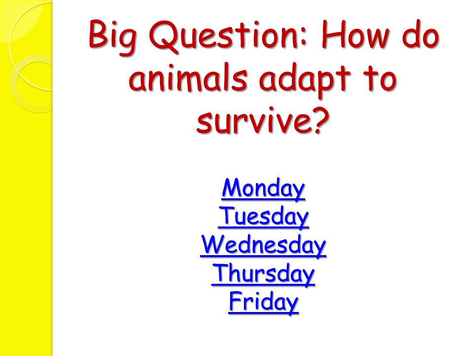 Big Question: How do animals adapt to survive