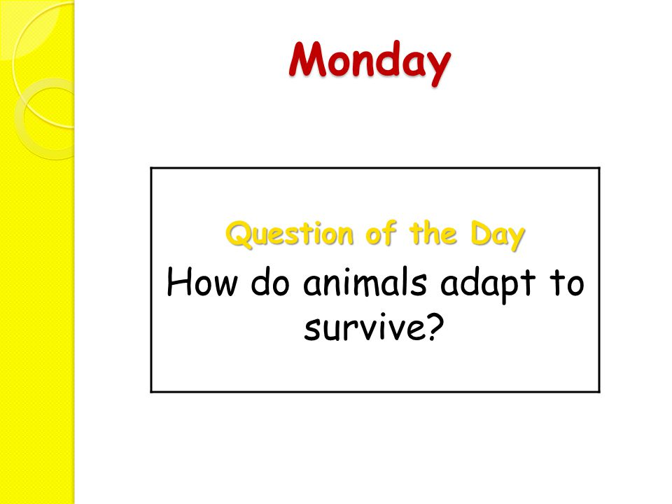 How do animals adapt to survive