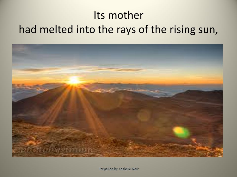 Its mother had melted into the rays of the rising sun,