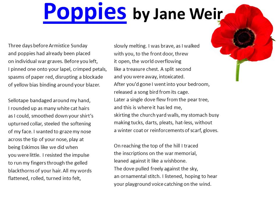Poppies by Jane Weir Three days before Armistice Sunday