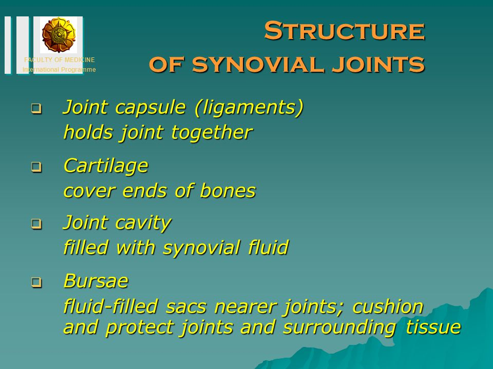 Structure of synovial joints