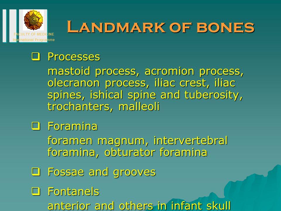 Landmark of bones Processes