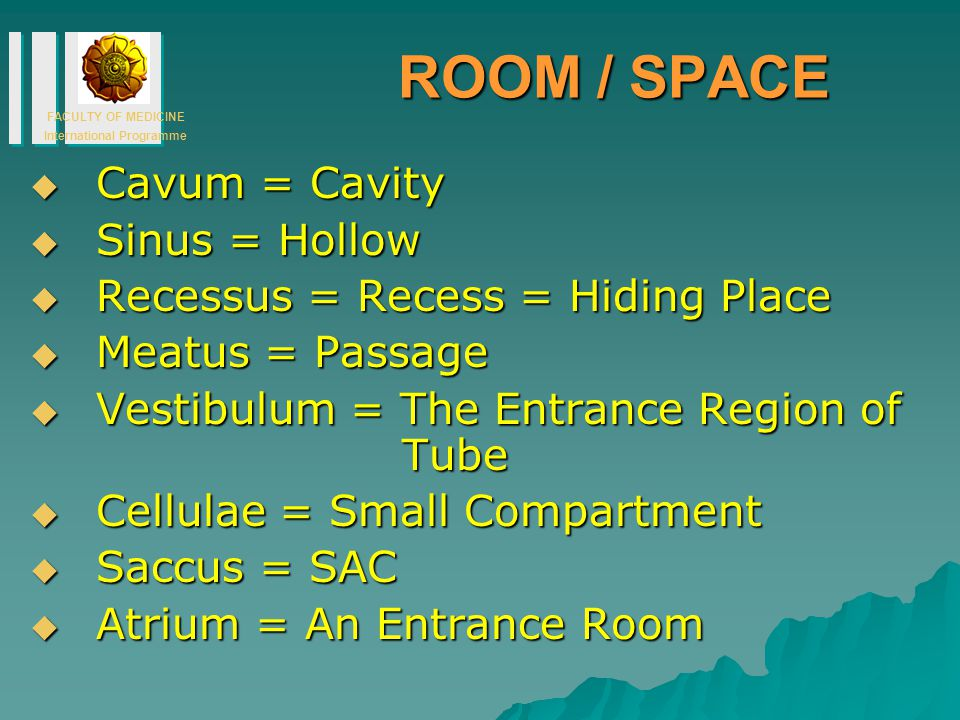 ROOM / SPACE Cavum = Cavity Sinus = Hollow