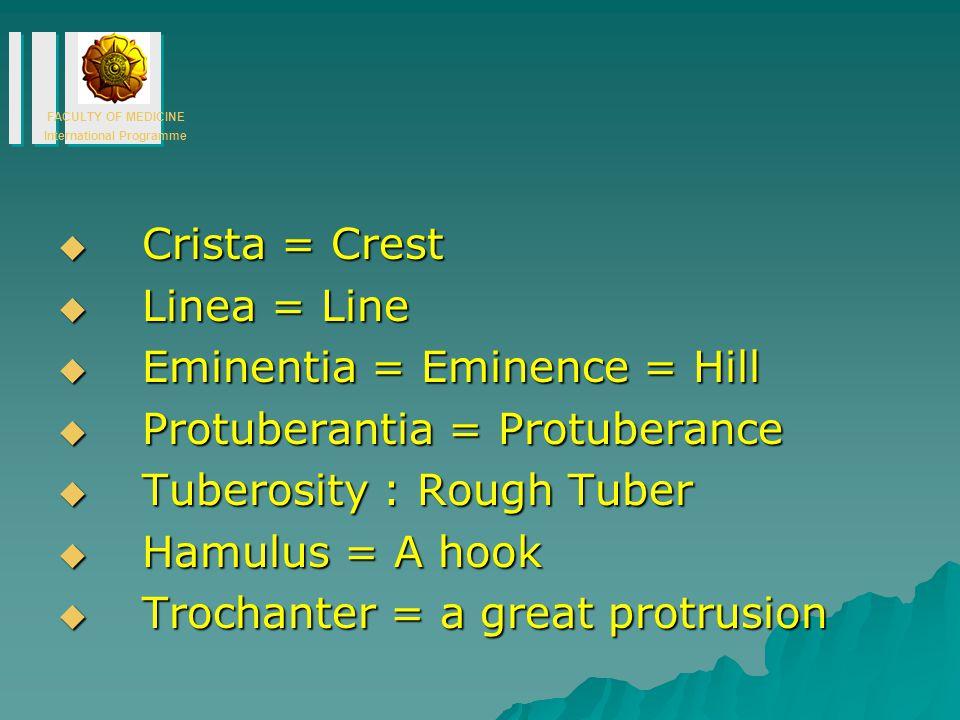 Crista = Crest Linea = Line. Eminentia = Eminence = Hill. Protuberantia = Protuberance. Tuberosity : Rough Tuber.