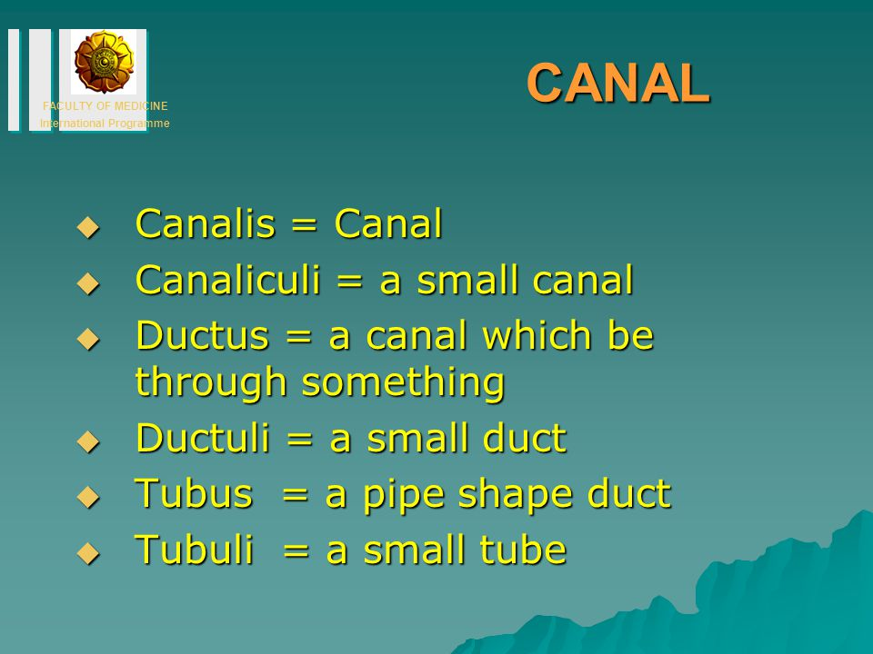 CANAL Canalis = Canal Canaliculi = a small canal
