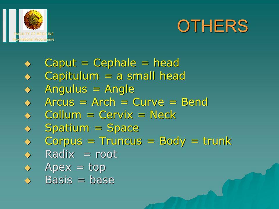 OTHERS Caput = Cephale = head Capitulum = a small head Angulus = Angle