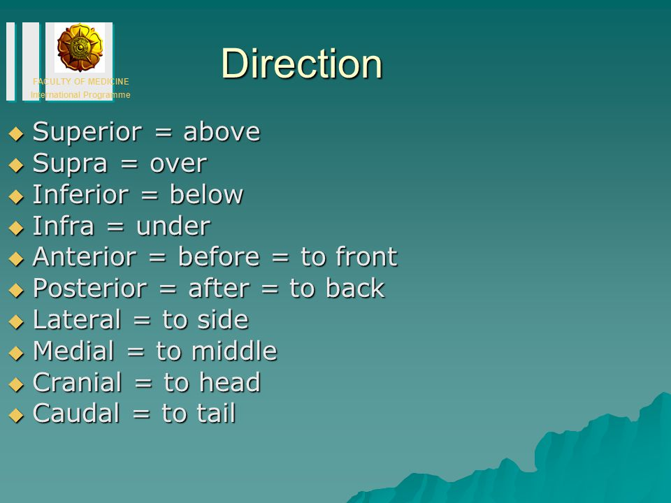 Direction Superior = above Supra = over Inferior = below Infra = under