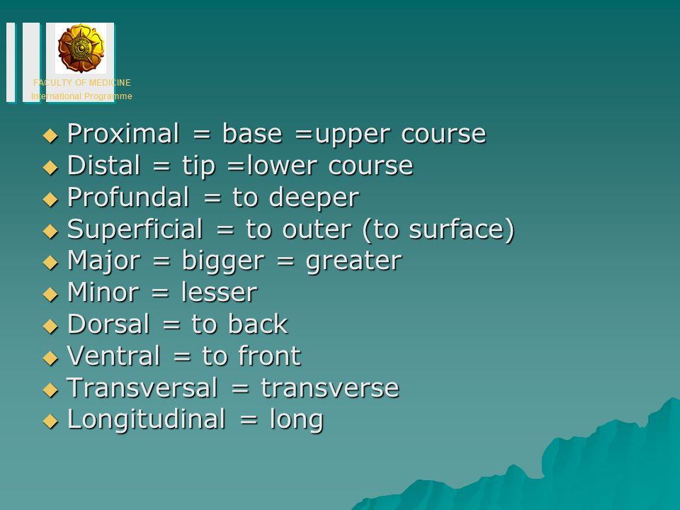 Proximal = base =upper course