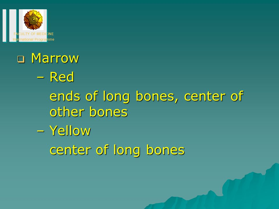 Marrow Red ends of long bones, center of other bones Yellow center of long bones