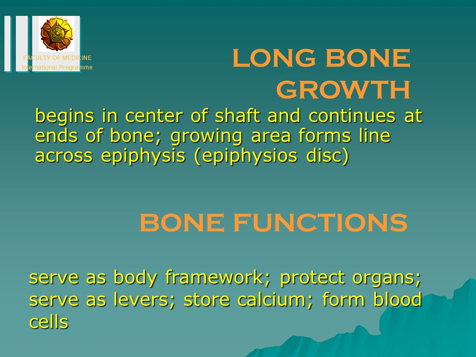 LONG BONE GROWTH BONE FUNCTIONS
