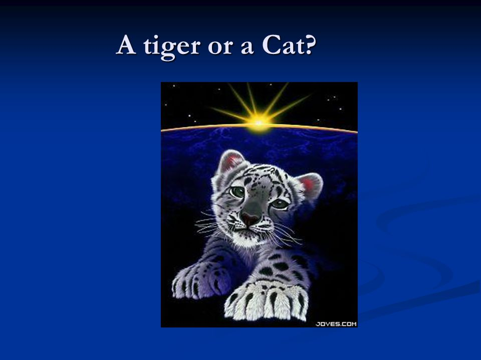 A tiger or a Cat