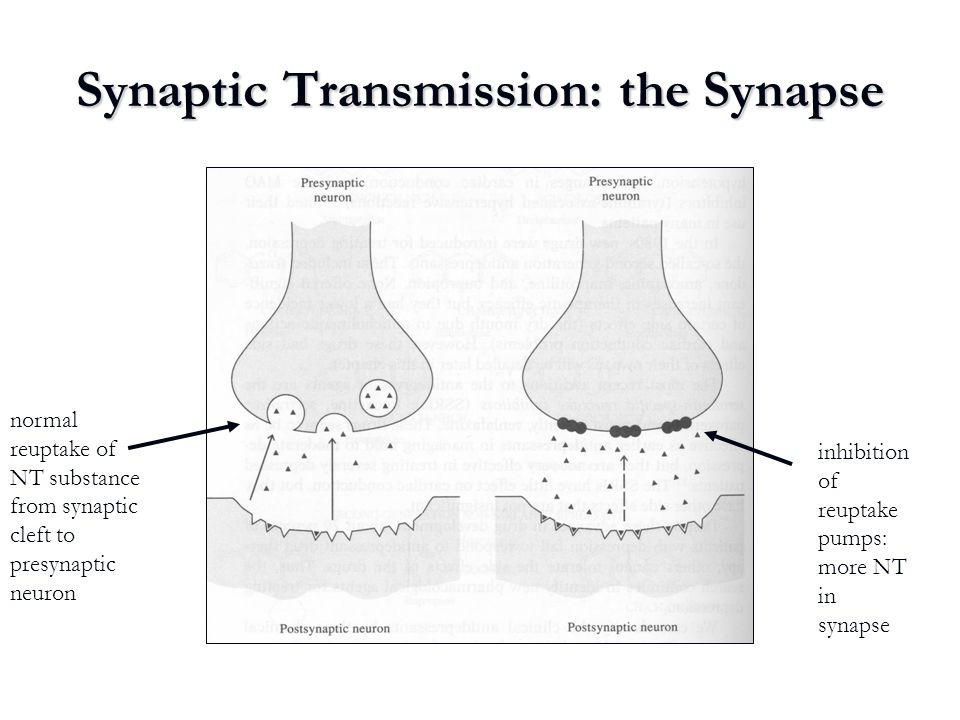 Synaptic Transmission: the Synapse
