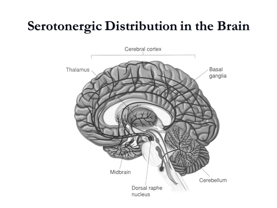 Serotonergic Distribution in the Brain