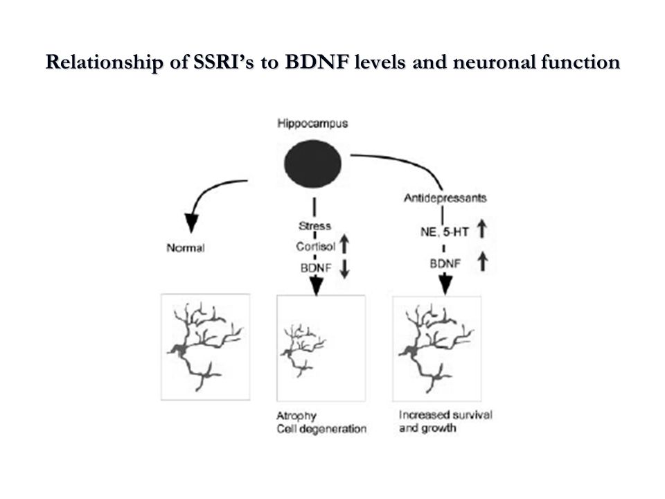 Relationship of SSRI's to BDNF levels and neuronal function
