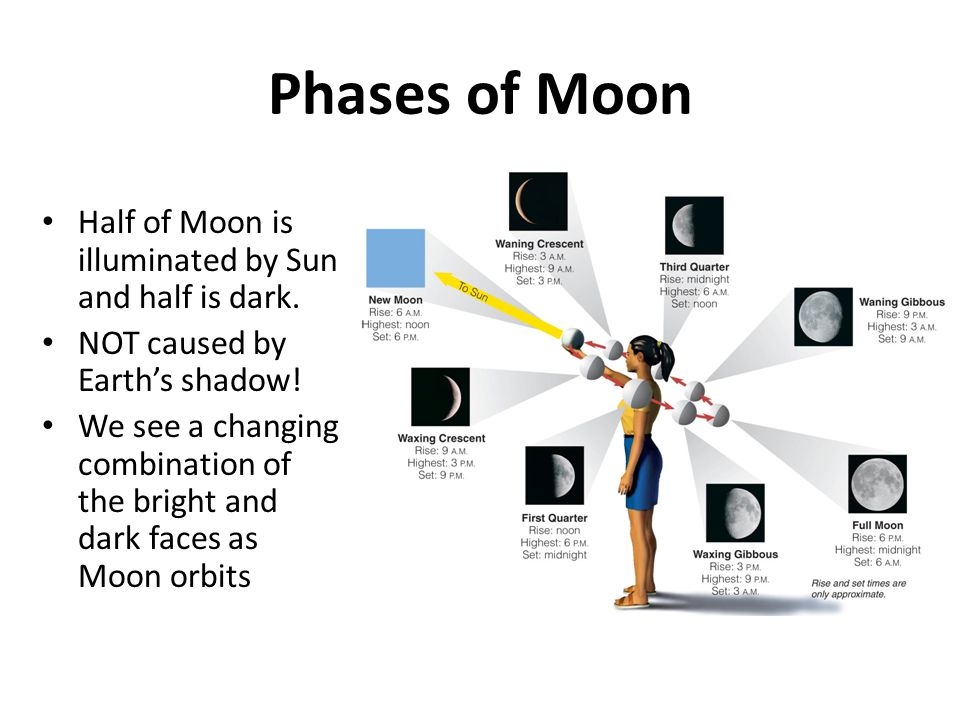 Phases of Moon Half of Moon is illuminated by Sun and half is dark.