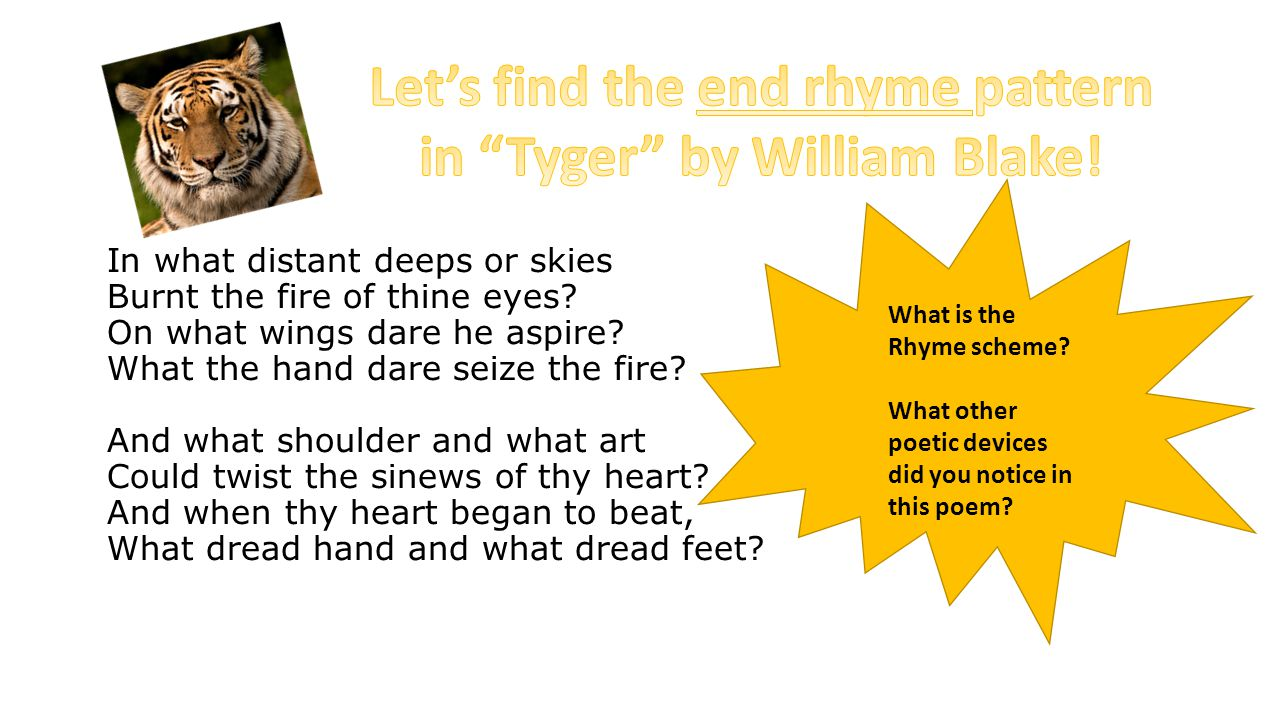 Let's find the end rhyme pattern in Tyger by William Blake!