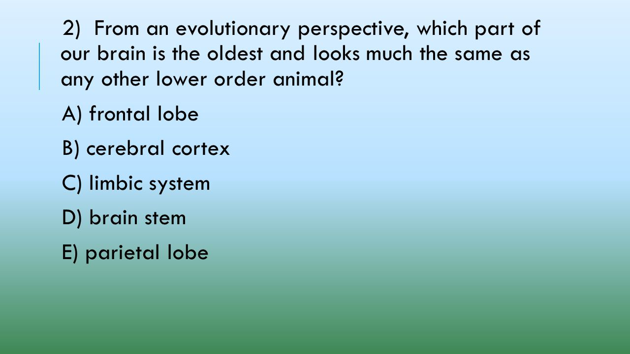 2) From an evolutionary perspective, which part of our brain is the oldest and looks much the same as any other lower order animal