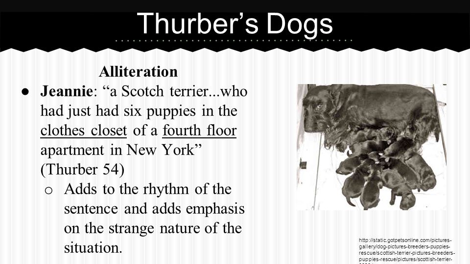 Thurber's Dogs (cont.) Personification