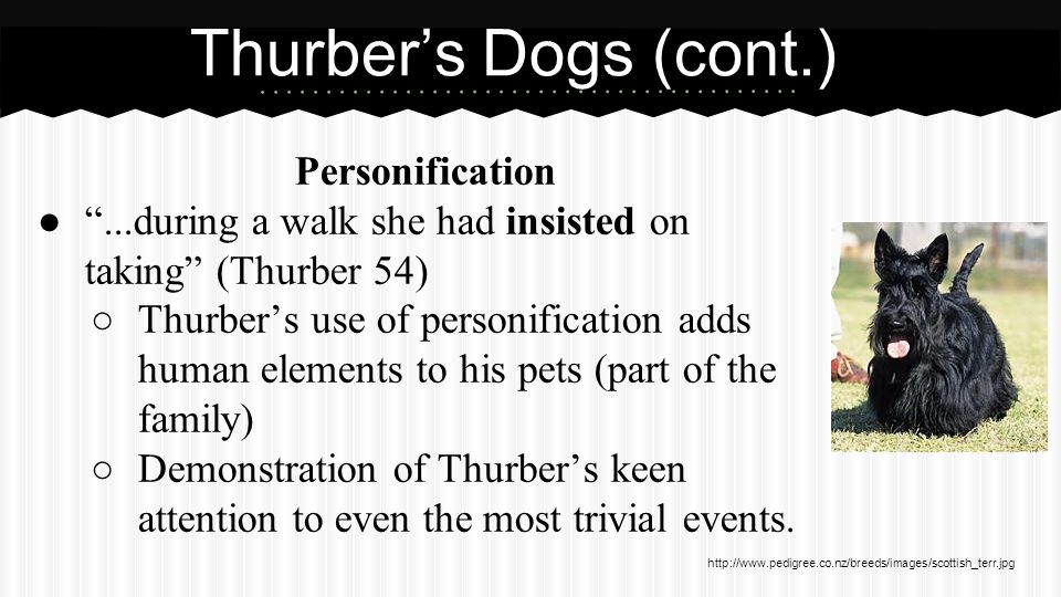 Thurber's Dogs (cont.) Diction