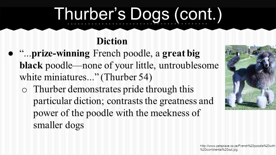 Muggs Alliteration. The airedale was the worst of all my dogs...A big, burly, choleric dog... (Thurber 55).