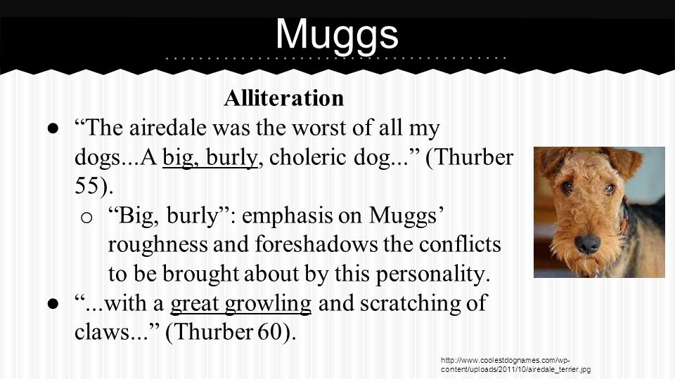 Muggs (cont.) Diction. ...he always acted as if he thought I wasn't one of the family (Thurber 55).
