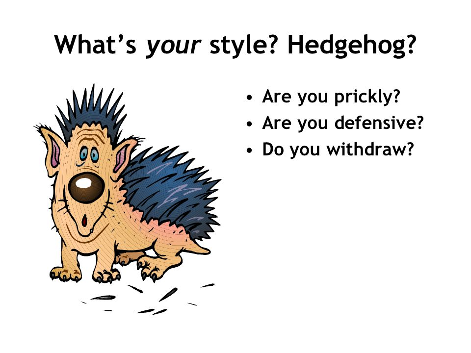 What's your style Hedgehog
