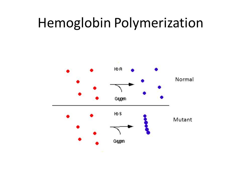 Hemoglobin Polymerization