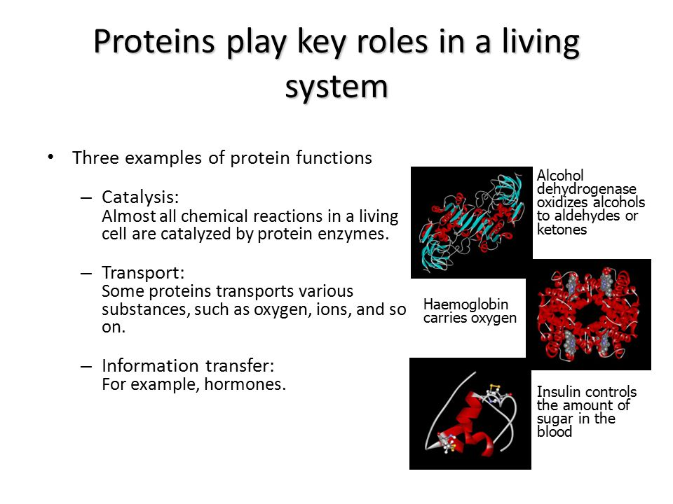 Proteins play key roles in a living system