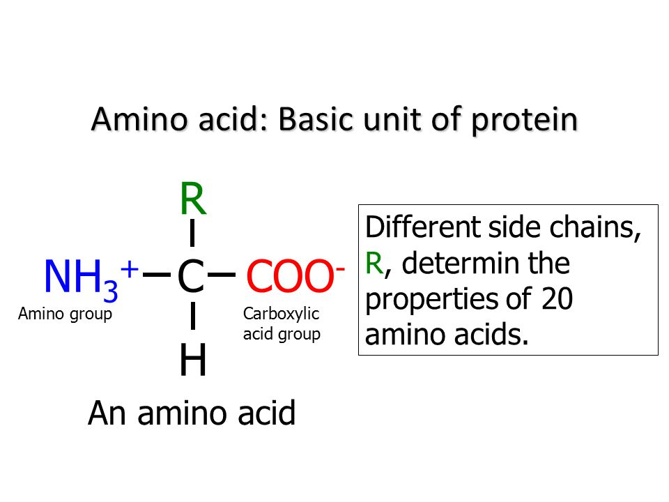 Amino acid: Basic unit of protein