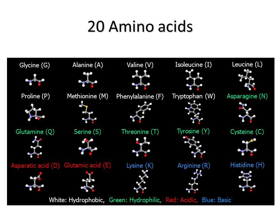 White: Hydrophobic, Green: Hydrophilic, Red: Acidic, Blue: Basic