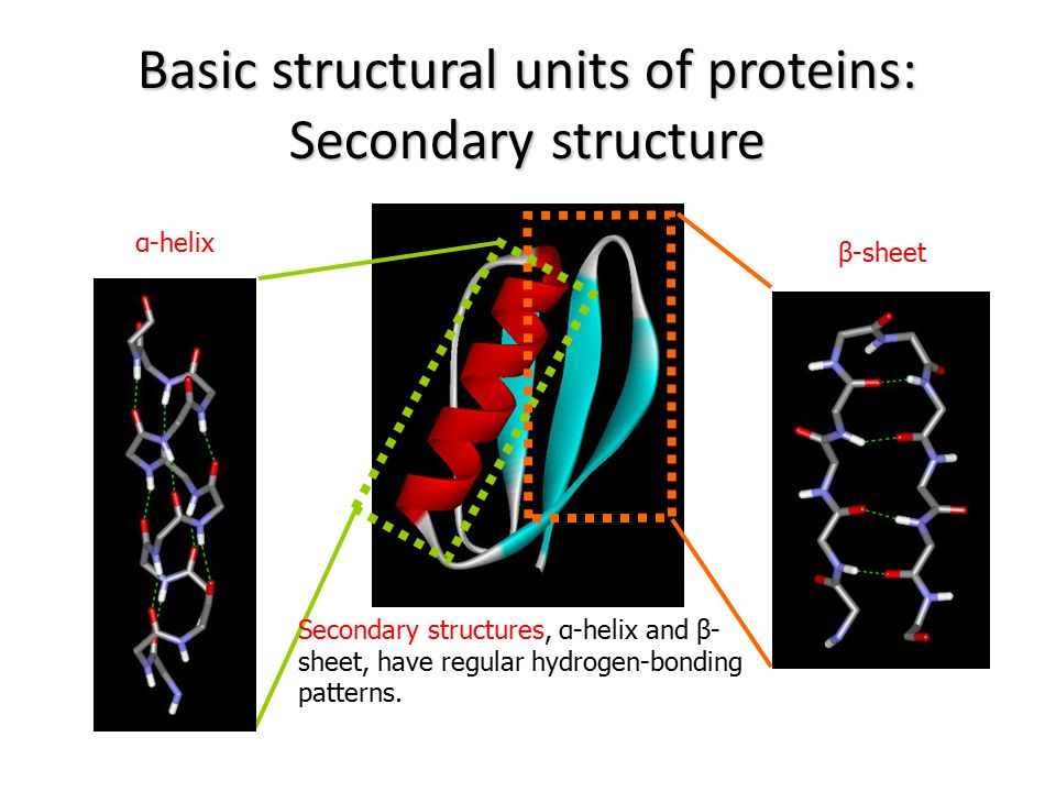 Basic structural units of proteins: Secondary structure
