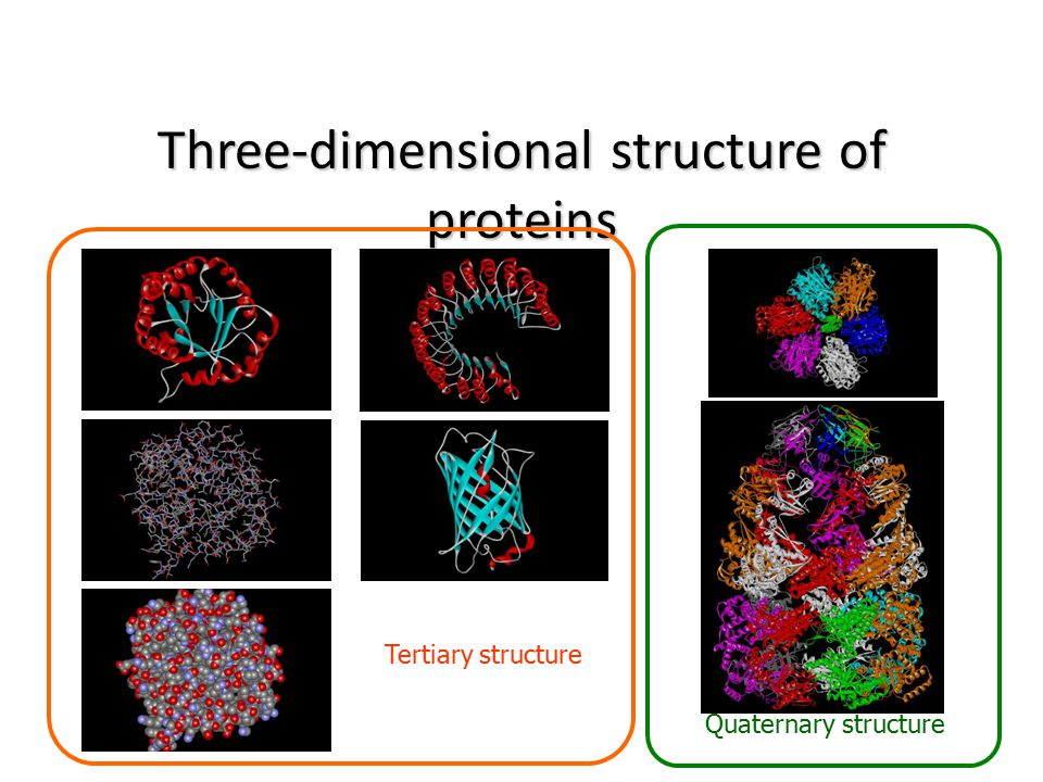 Three-dimensional structure of proteins