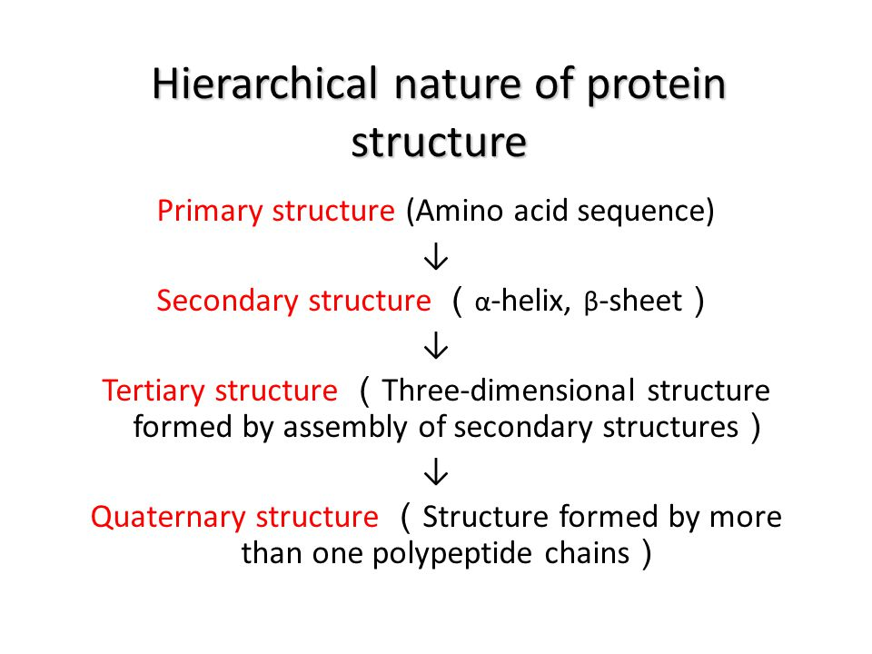 Hierarchical nature of protein structure