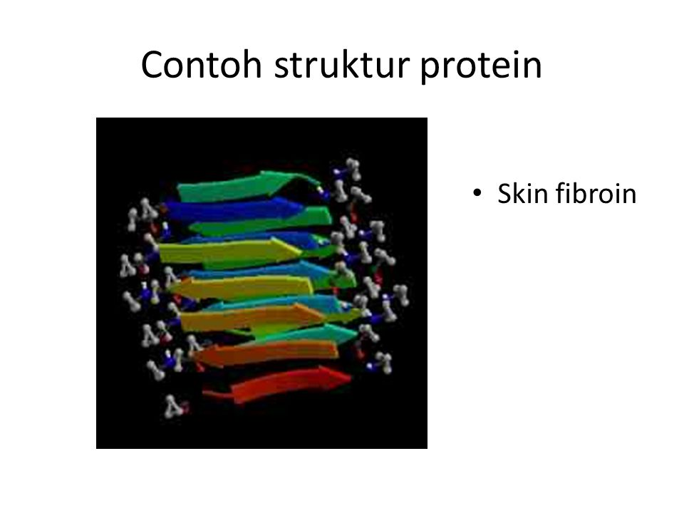 Contoh struktur protein
