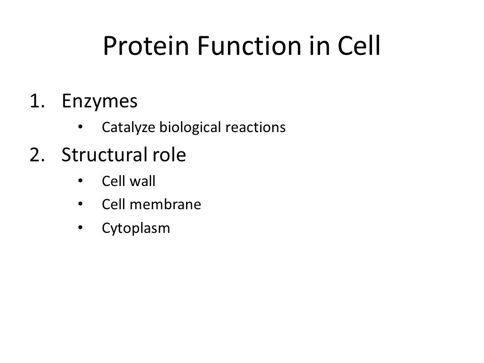 Protein Function in Cell