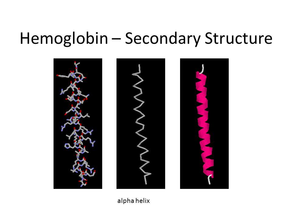 Hemoglobin – Secondary Structure