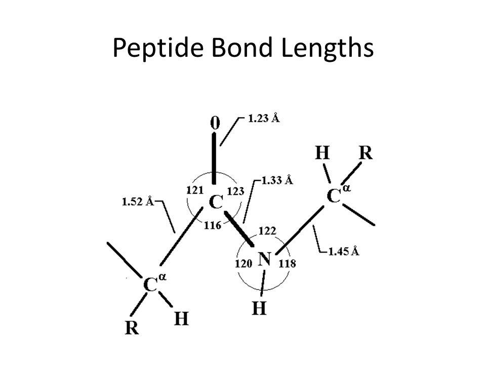 Peptide Bond Lengths