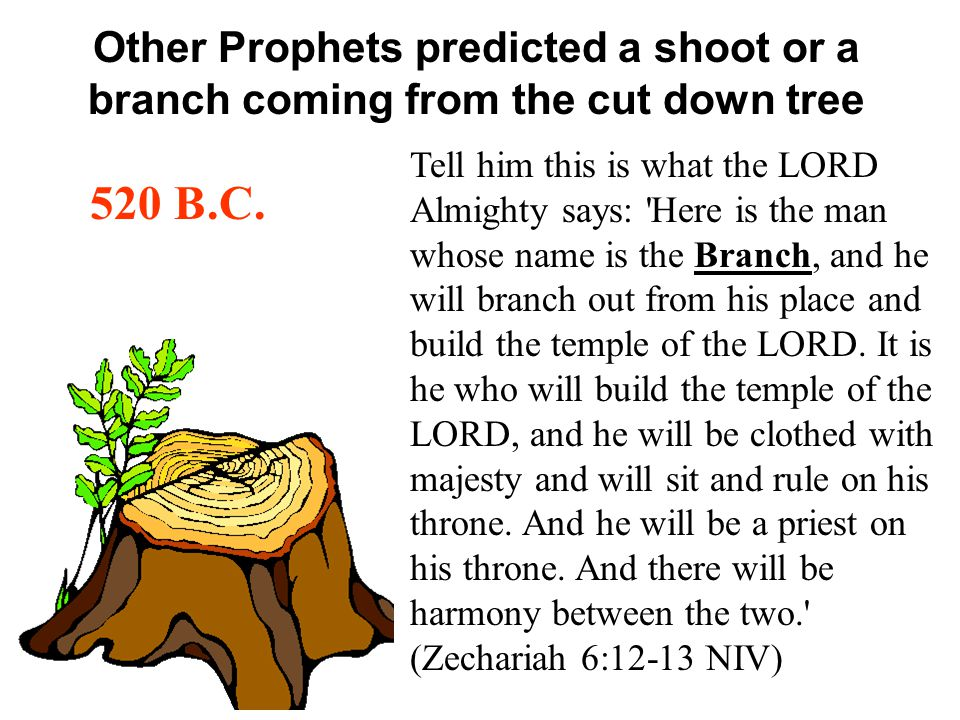 Other Prophets predicted a shoot or a branch coming from the cut down tree