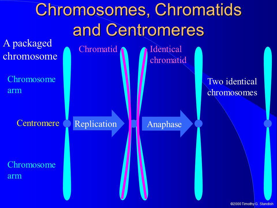 Chromosomes, Chromatids and Centromeres
