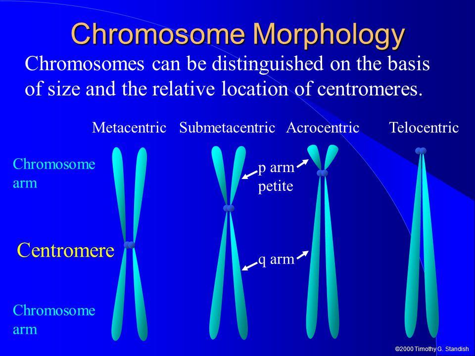 Chromosome Morphology