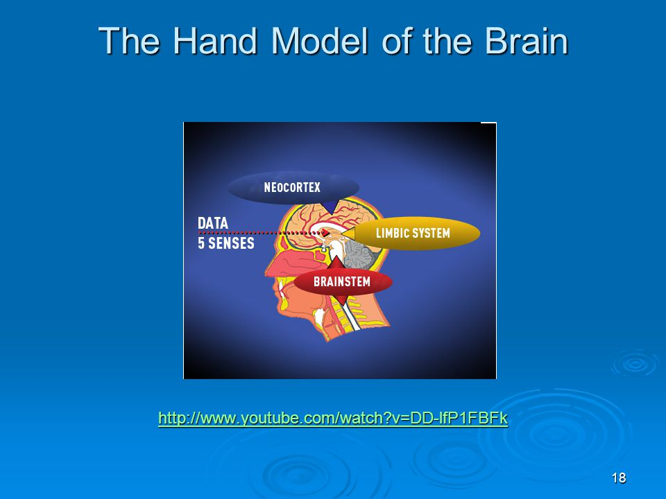 The Hand Model of the Brain